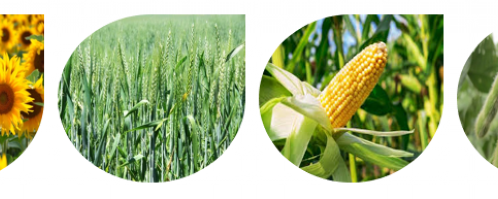 Experience of the use of Equilibrium®, Bioiberica's synergistic biostimulant, in field crops